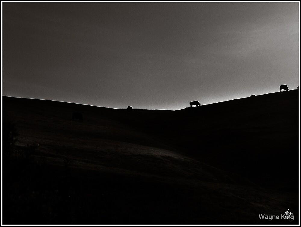 Sundown Monochrome - Cows on a Ridge by Wayne King