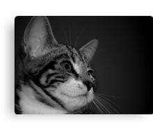 Kitten BW Canvas Print