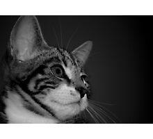 Kitten BW Photographic Print