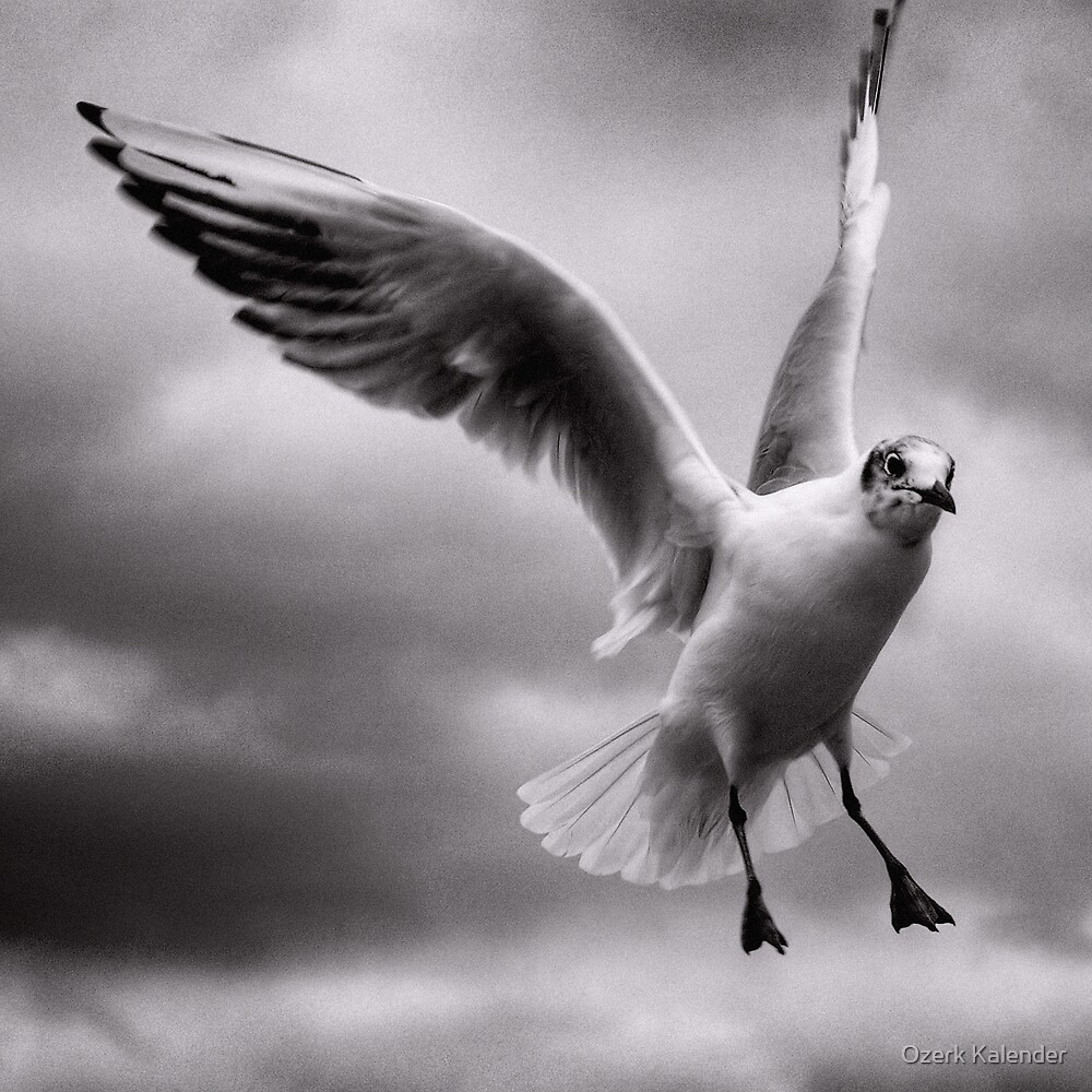 Flight by Ozerk Kalender