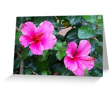 hibiscus from our casa Greeting Card