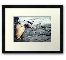 Nursing Sea Lion Framed Print