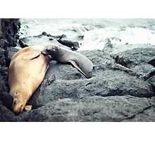Nursing Sea Lion Photographic Print