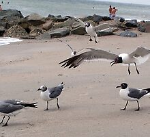 Gulls in Flight by shockolot