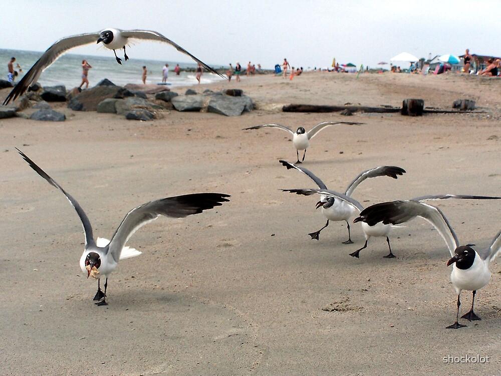 Gulls in Flight II by shockolot