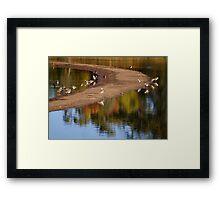 Laratinga Wetlands I Framed Print