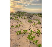 cable beach sand dunes  Photographic Print