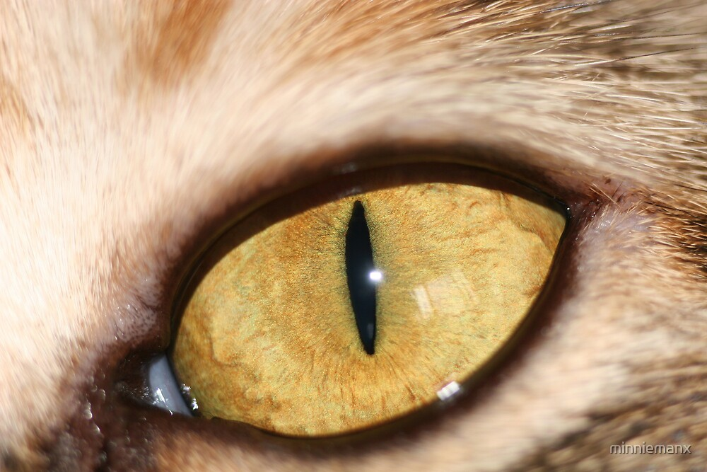 The Cat's Eye by minniemanx
