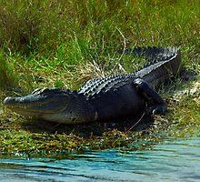 Three Legged Gator by Michael Wolf