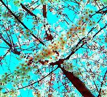 Cherry Blossom by PrEtTyGiRl91
