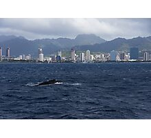 Whale Watching in Honolulu, Hawaii Photographic Print