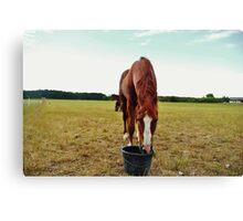 A Horse Canvas Print