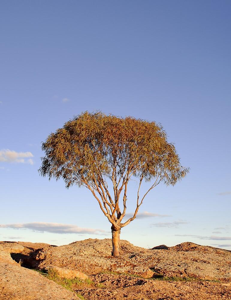Lisa's Tree by David Haviland