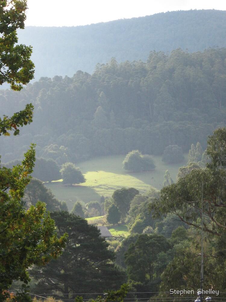 Fields in the Woods above Warburton, Victoria, Australia by Stephen  Shelley
