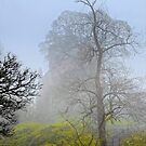 Castle Campbell in the fog by Jeremy Lavender Photography
