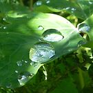 Nature's Magnifying Glass by Martha Medford