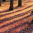 Confetti Carpet by reindeer