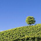 vineyard by drdoc2000