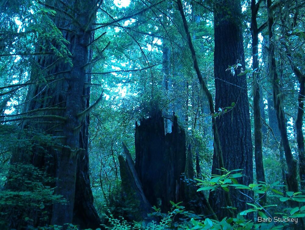 Fallen Redwoods by Barb Stuckey