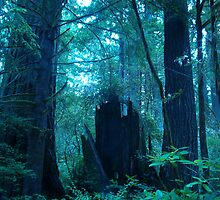 Fallen Redwoods by Barb Stuckey