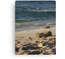 Piece of coral Canvas Print
