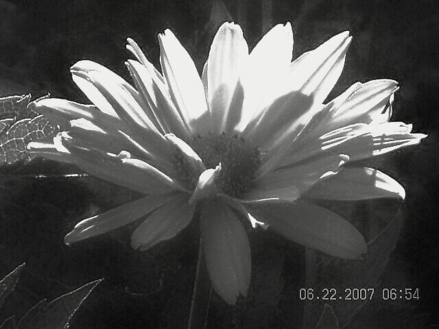 and white flower by Jaclyn Clemens