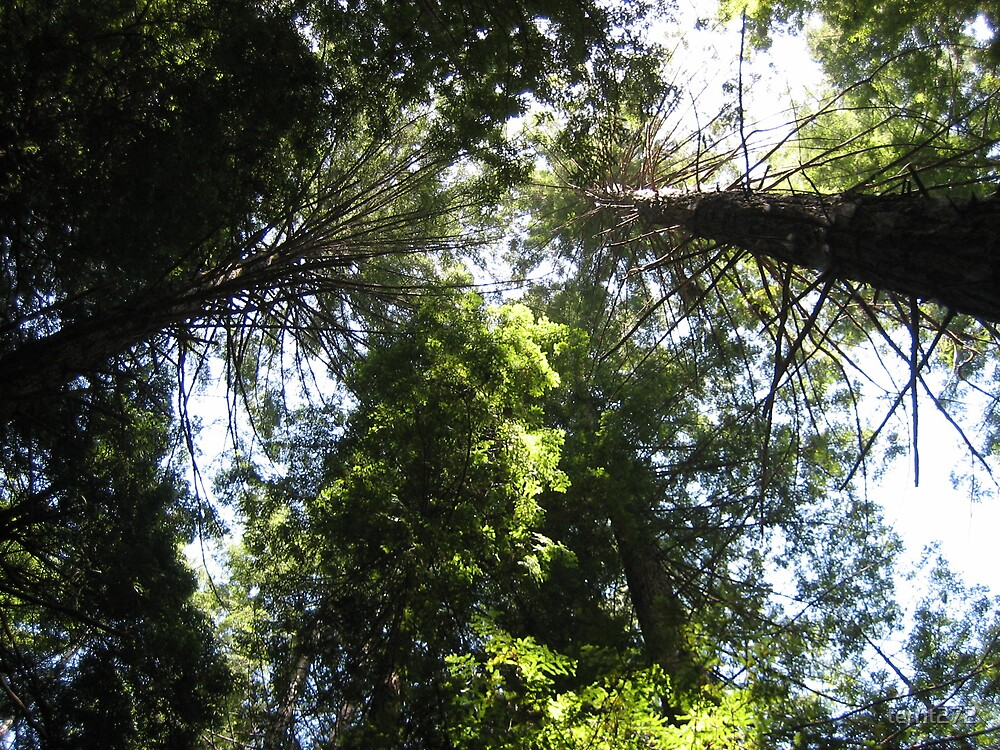 woodlands Northern california REDWOODS by territ272