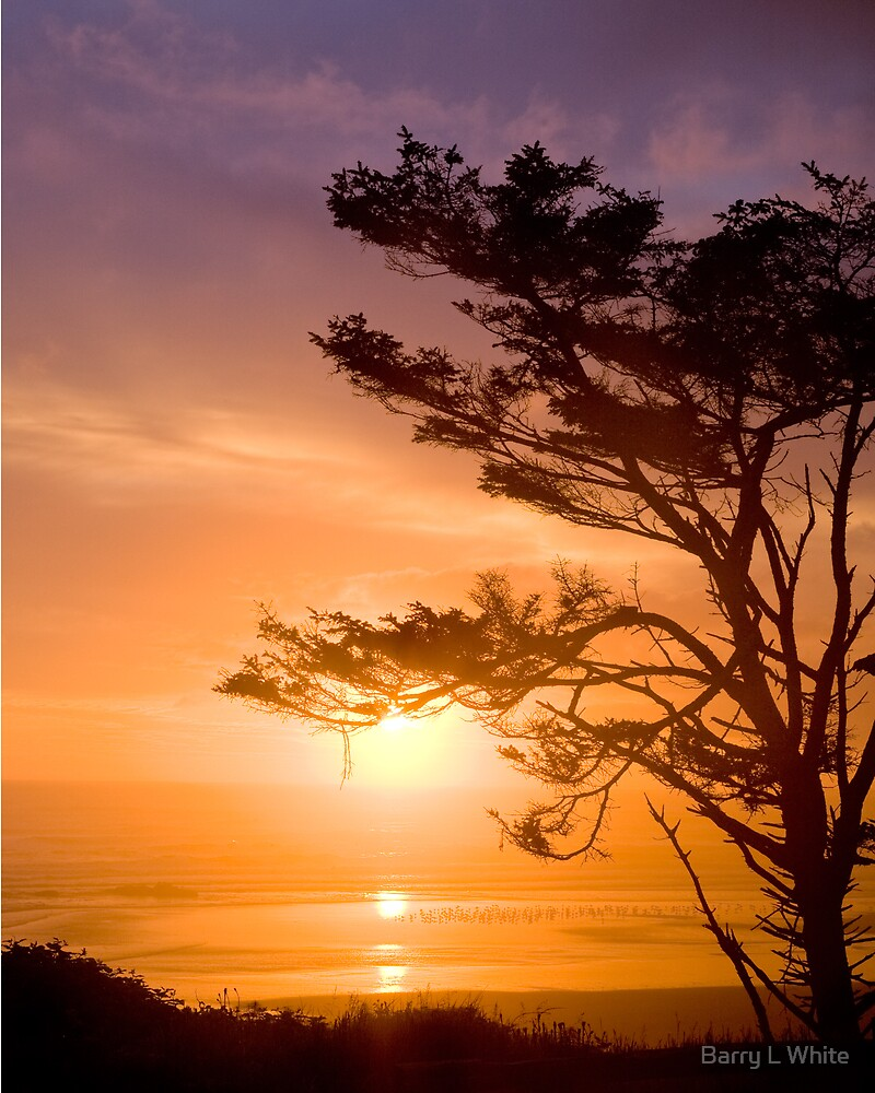 Olympic Coast Sunset (9075) by Barry L White