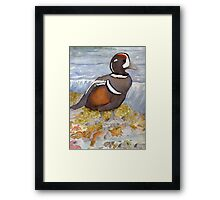 Harlequin Duck Framed Print