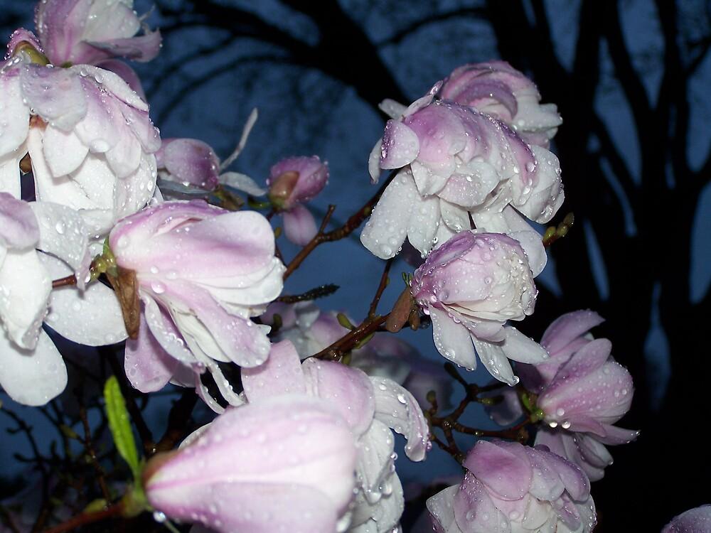 Magnolia Bush by jrnichol