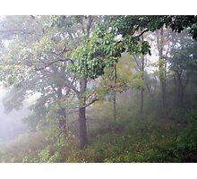 Foggy Shenandoah Mountain Top Photographic Print