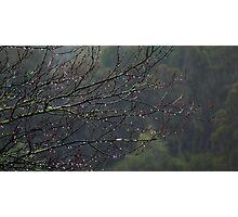 One Rainy Day Photographic Print
