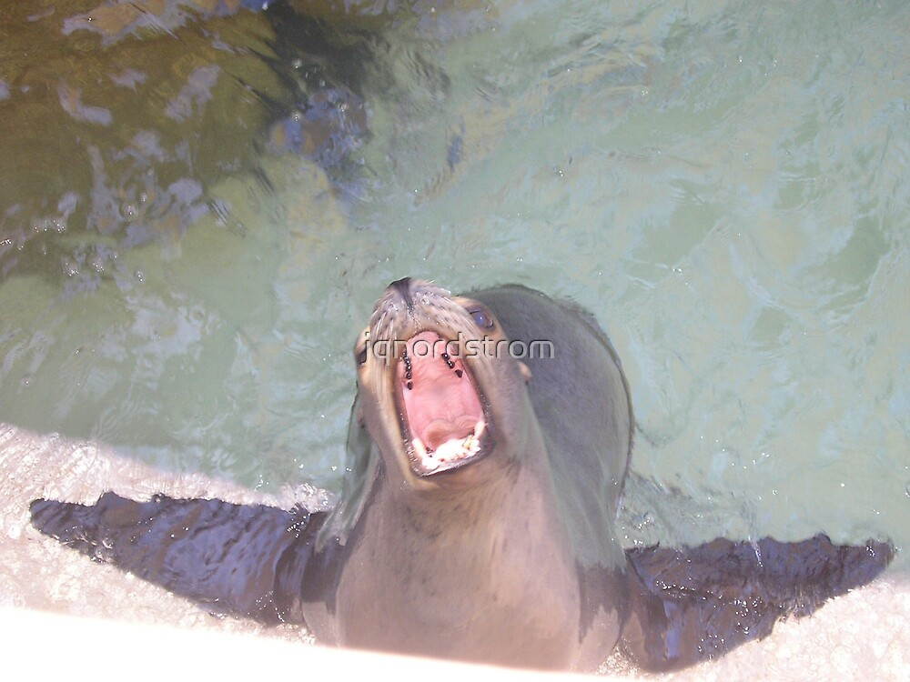 Sea Lion by jqnordstrom