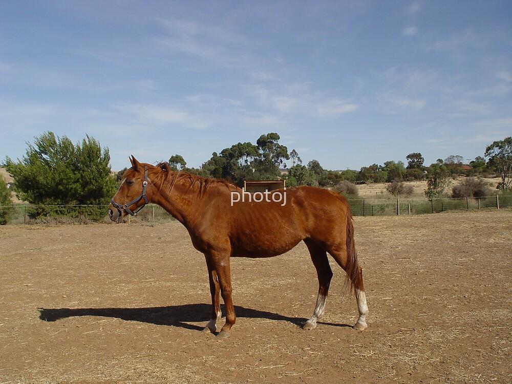 photoj horse by photoj