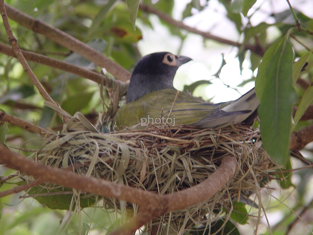 photoj bird by photoj