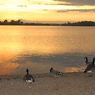 Geese Enjoying a Golden Sunset by daydremr