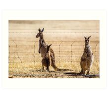 At the fence Art Print