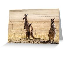 At the fence Greeting Card