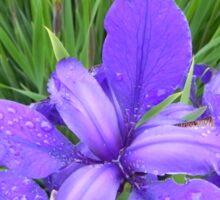 Dew Drops on Iris Sticker