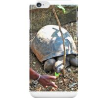 HAWKSBILL TURTLE BEING FED A BANANA iPhone Case/Skin