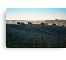 Early Morning Cows In The Countryside Canvas Print