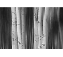 Aspen Tree Colonies Dreaming BW Photographic Print