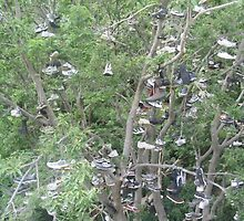 Shoe tree by Tmarie