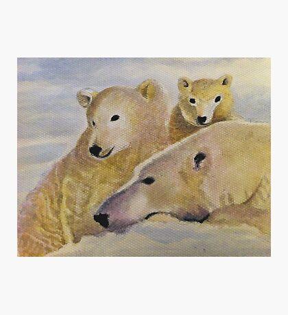 Bear Family  Photographic Print