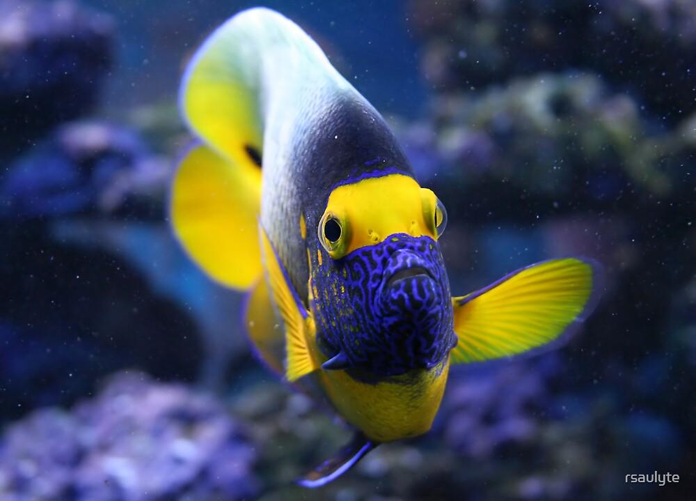 Aquarium fish by rsaulyte
