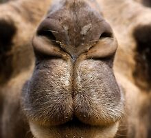 Awh, go on, pucker up ... by Marianne