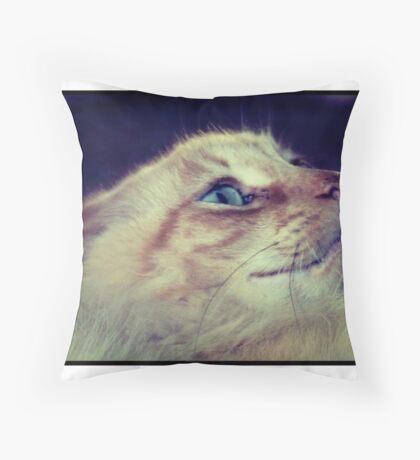 Scaredy Cat Throw Pillow