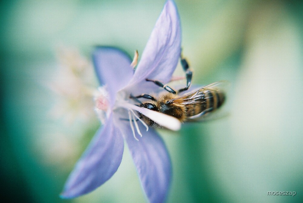 Blue Bee by moseszap