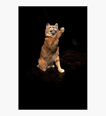 Aloof cat Photographic Print