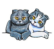 Scottish Fold Pair Photographic Print